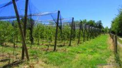 Eko voćnjak sa objektom u blizini Dugog sela